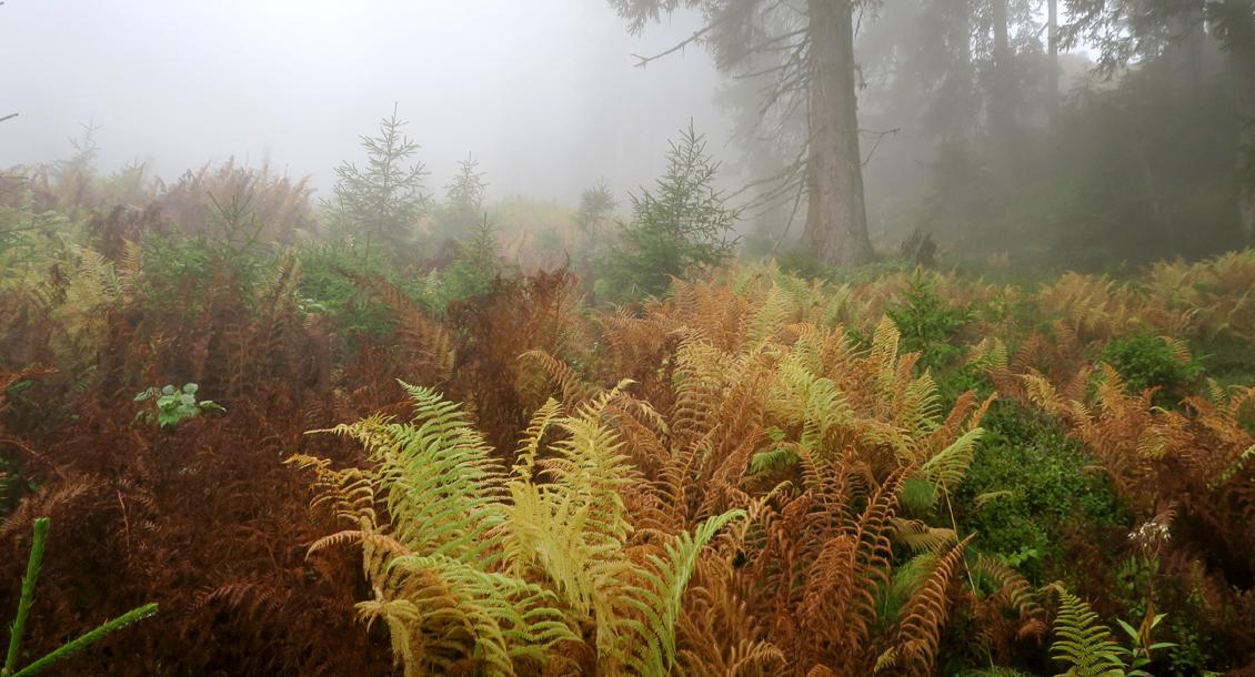 RAW Baden im Wald