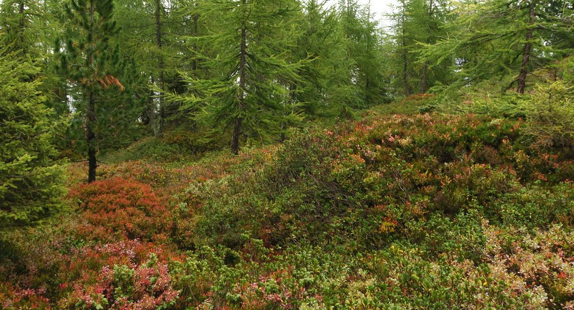 RAW Waldbaden Zillertal