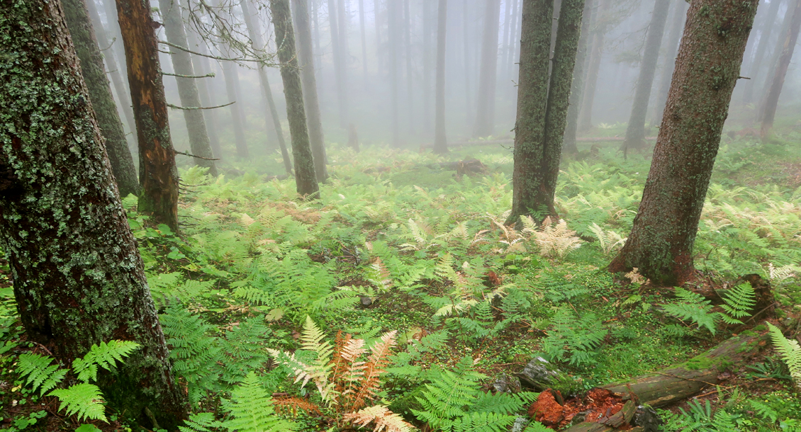 RAW Waldbaden