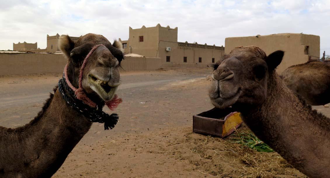 Marokko Wüstentrekking